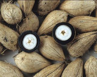 Benefícios Loção Nutritiva Murumuru