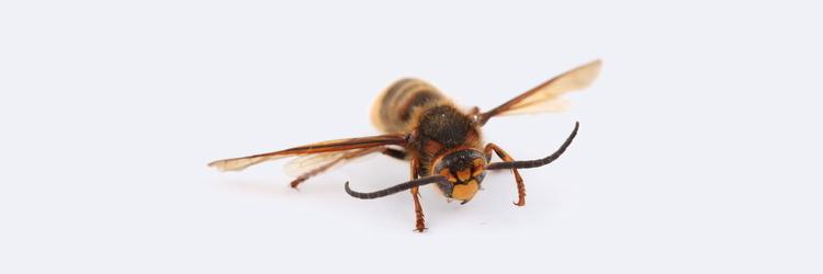 Proteja-se contra os insetos com o Anasol ZAZ