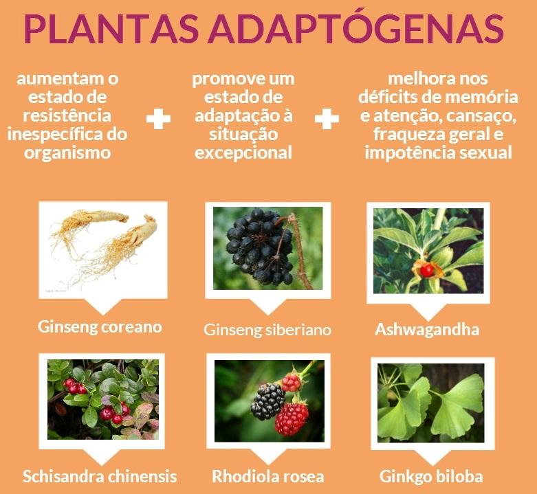 Resultado de imagem para alimentos adaptógenos
