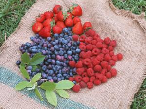 As frutas vermelhas tem vários benéficios para a saúde