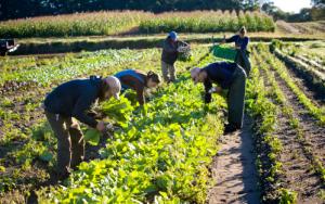 agricultura orgânica respeita o meio ambiente