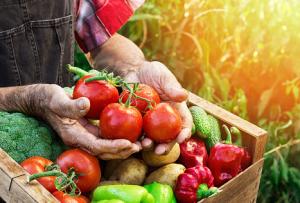 alimentos orgânicos são mais nutritivos