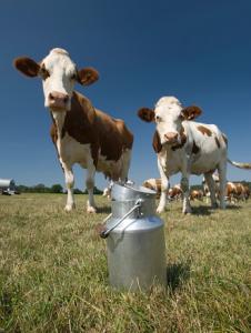 alimentos de origem animal são livres de químicas