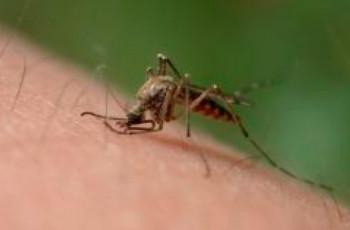 Icaridina: o seu repelente contra dengue