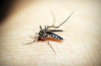 Conheça os quatro tipos de dengue